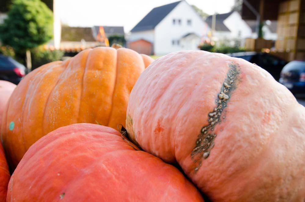 Halloween Time - die Kürbiszeit