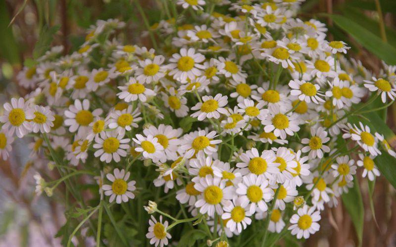 Bild Sommernacht Wiesenblumen
